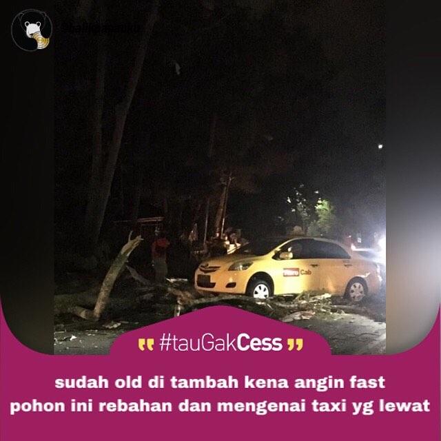 taxi ketimpa pohon