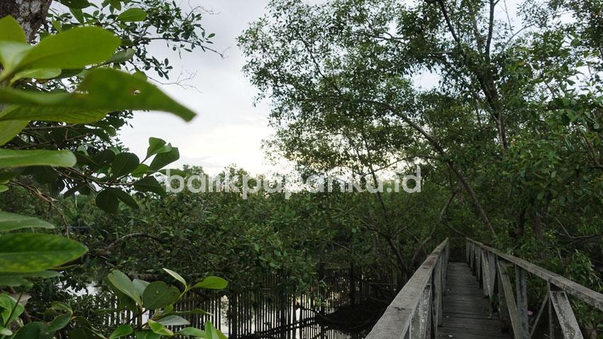 hutan mangrove margomulyo balikpapan