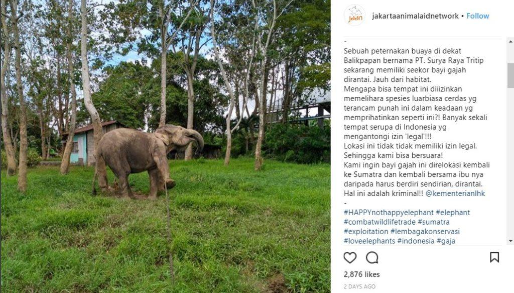 postingan jakarta animal aid network hoax